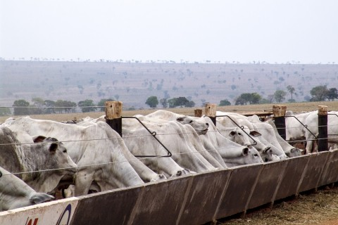 Indicador de custo desenvolvido por zootecnista auxilia produtor de gado em confinamento