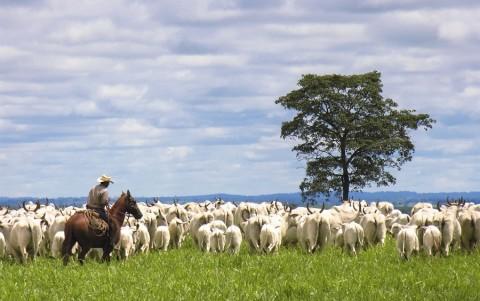 Faturamento da produção agropecuária bate recorde em 2015