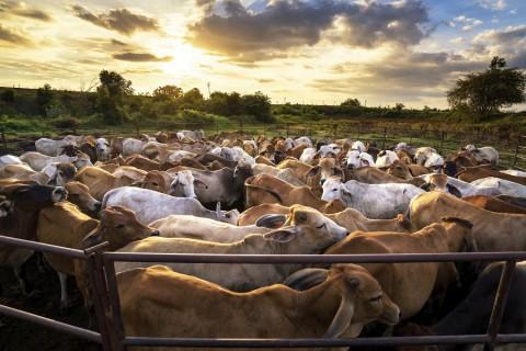 Agropecuária gera mais de 9,8 mil empregos em 2015, aponta levantamento