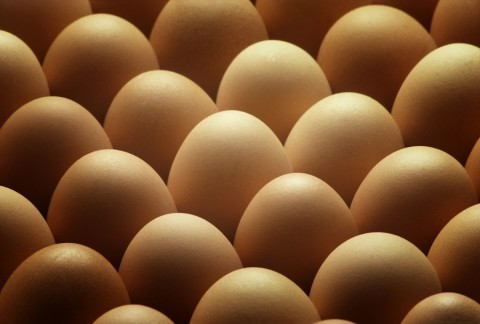 Exportação de ovos aumentou 53% em um ano