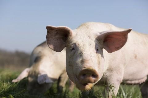 Produção pecuária para 2016 soma mais de R$ 178 bilhões