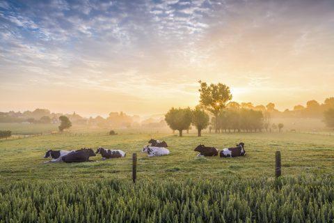 Zootecnista fala sobre modelo sustentável de produção em fazendas