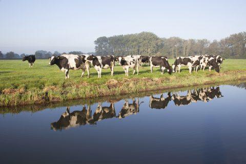 Zootecnista fala sobre uso racional da água na produção agropecuária