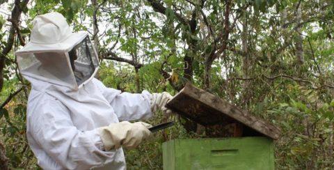 Em Tocantins, zootecnista orienta apicultores sobre alimentação das abelhas