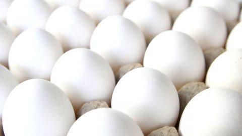 Brasil pode exportar ovos livres de patógenos específicos para Israel