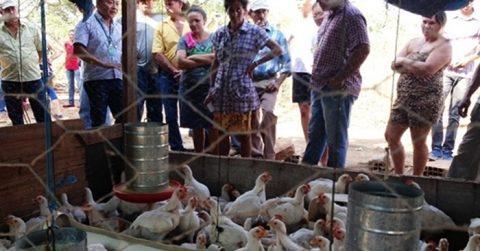 Zootecnista ministra curso sobre criação de frango caipira