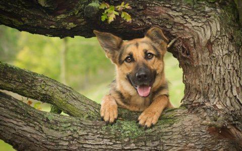 Zootecnista dá dicas de cuidados com cães no verão