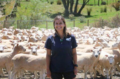 Zootecnista lança maratona para interessados em ovinocultura