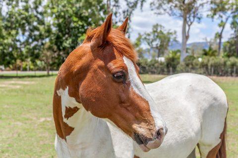 Zootecnista fala sobre alimentação de cavalos usados para equoterapia