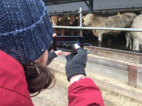 App pesa gado através de foto tirada pelo celular