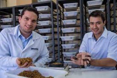Zootecnista fala sobre inclusão de farinha de insetos na alimentação