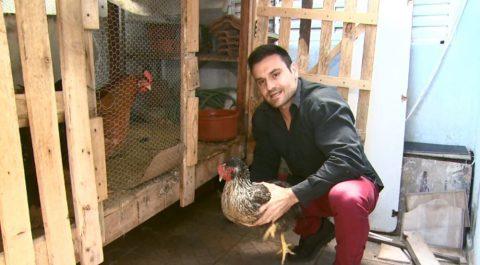 Zootecnista explica alimentação inusitada de galinhas com leite integral