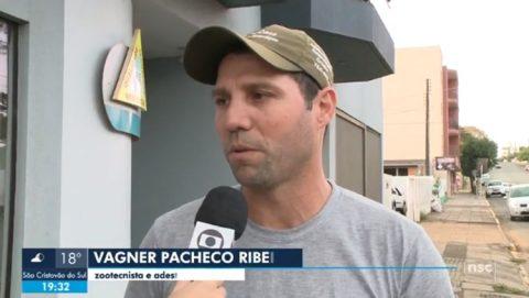 Zootecnista distribui coleiras refletoras para evitar acidente com cães em SC