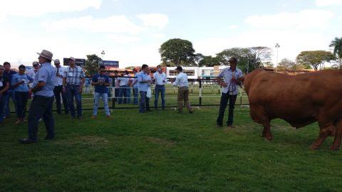 Começou o 29º Congresso Brasileiro de Zootecnia, em Uberaba